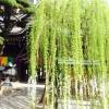 池坊を体系化した本を著したのは?京都・観光文化検定三級過去問