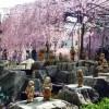 へそ石 京都・観光文化検定三級に一発合格ポイント!