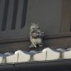 町家の小屋根の人形 京都・観光文化検定三級に合格