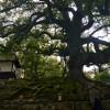 青蓮院門前 京都・観光文化検定(京都検定)合格ガイド