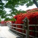 キリシマツツジの名所で菅原道真ゆかりの神社は?京都検定過去問で三級合格!