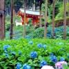 花の名所・三室戸寺で特に有名な花は?京都・観光文化検定(京都検定)三級合格ガイド!