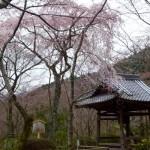 西行が出家した寺院は?京都・観光文化検定(京都検定)三級合格ガイド