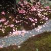 椿寺 地蔵院にある有名な椿名は?京都・観光文化検定(京都検定)三級合格ガイド!