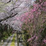 哲学の道とは?京都・観光文化検定(京都検定)三級合格ガイド!