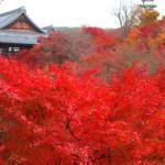 境内にある通天橋一帯が紅葉の名所として知られる寺院は?京都検定三級合格ガイド!