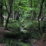 下鴨神社の社叢である森は?京都・観光文化検定(京都検定)三級過去問!