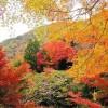 三尾とは?京都・観光文化検定(京都検定)三級合格ガイド!