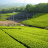 栂尾と並んで古くから茶の産地として知られるのは?京都検定三級過去問‼️