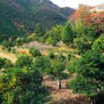 さまざまな食品に加工されている水尾地区産の果実は?京都検定三級過去問!