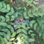 家の鬼門に厄除・魔除として植える植物は?京都検定三級過去問!