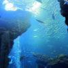 京都水族館にもおり、河川にも生息している特別天然記念物は?京都検定三級過去問!