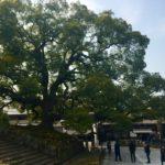 通称青不動がある寺院はどこか?京都検定3級過去問!