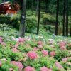 宇治にあり、アジサイやツツジの名所として知られる寺院は?京都検定3級過去問‼️