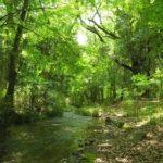 「糺の森」を境内に持つ神社は?京都検定3級過去問!